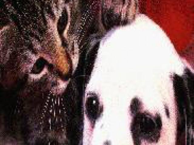 A posse responsável dos animais  é um compromisso com a vida