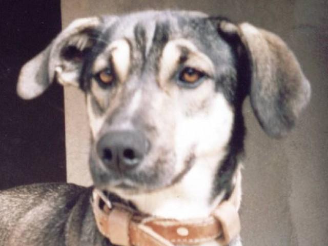 O olhar de um cão !
