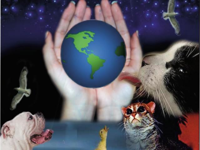 Lançada a Cartilha do Dia Nacional de Adotar um Animal 2008