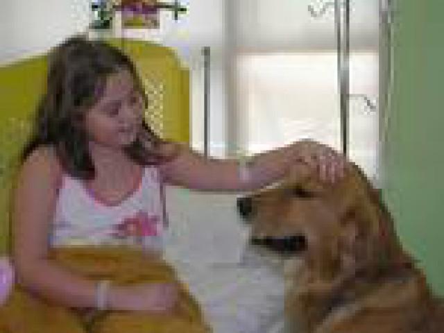 Cão terapia é uma alternativa para amenizar os efeitos do tratamento do câncer.