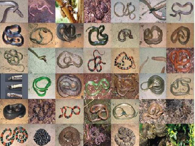 Butantan desenvolve soro contra o veneno de víboras