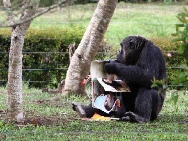 Enriquecimento ambiental previne estresse nos animais