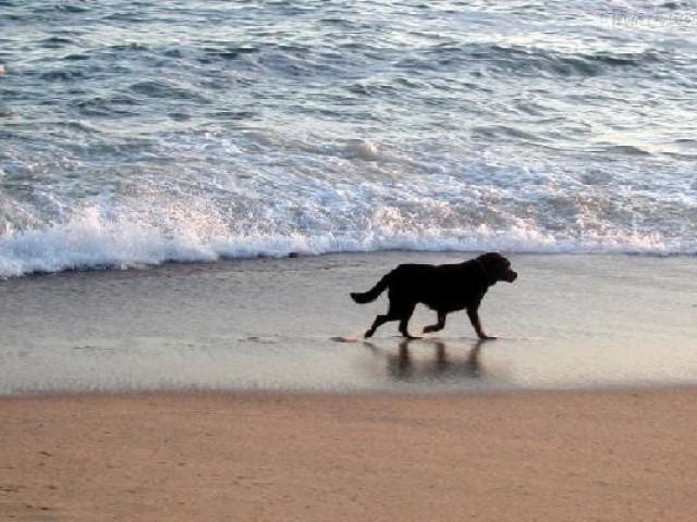 Fim de férias: pets devem fazer exame de sangue específico depois do período de viagens