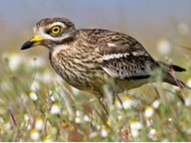 Portugal lançou roteiro de Observação de Aves