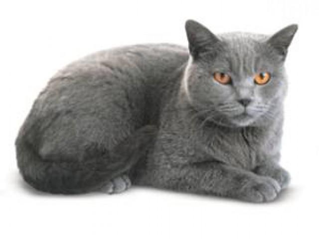 Sinais de envelhecimento nos gatos podem surgir a partir dos 7 anos