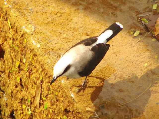 No Campus Luiz de Queiroz ocorrem cerca de duas centenas de espécies de aves