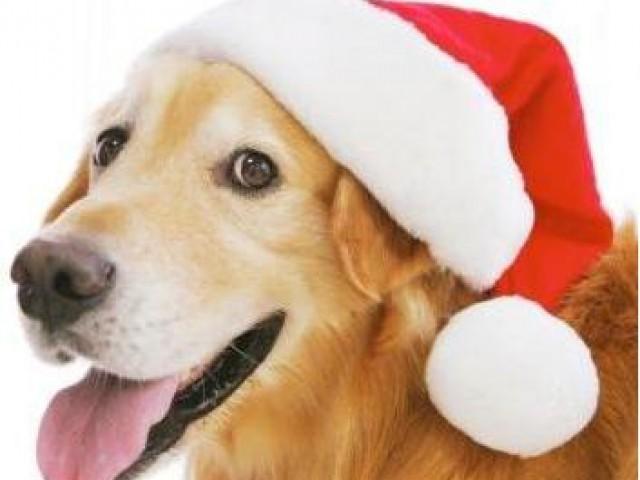 Natal....tempo de demonstrar amor pelos animais !